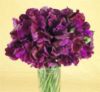 beautiful sweetpea flowers