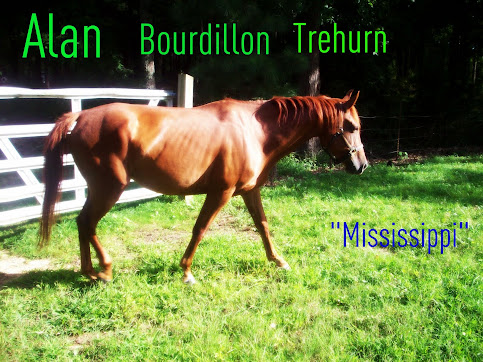 "Alan Bourdillon Traherne ""Mississippi"" - Quarter Horse"