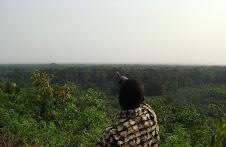 Forêt des Marais Tanoe Ehy, la petite forêt aux grandes valeurs