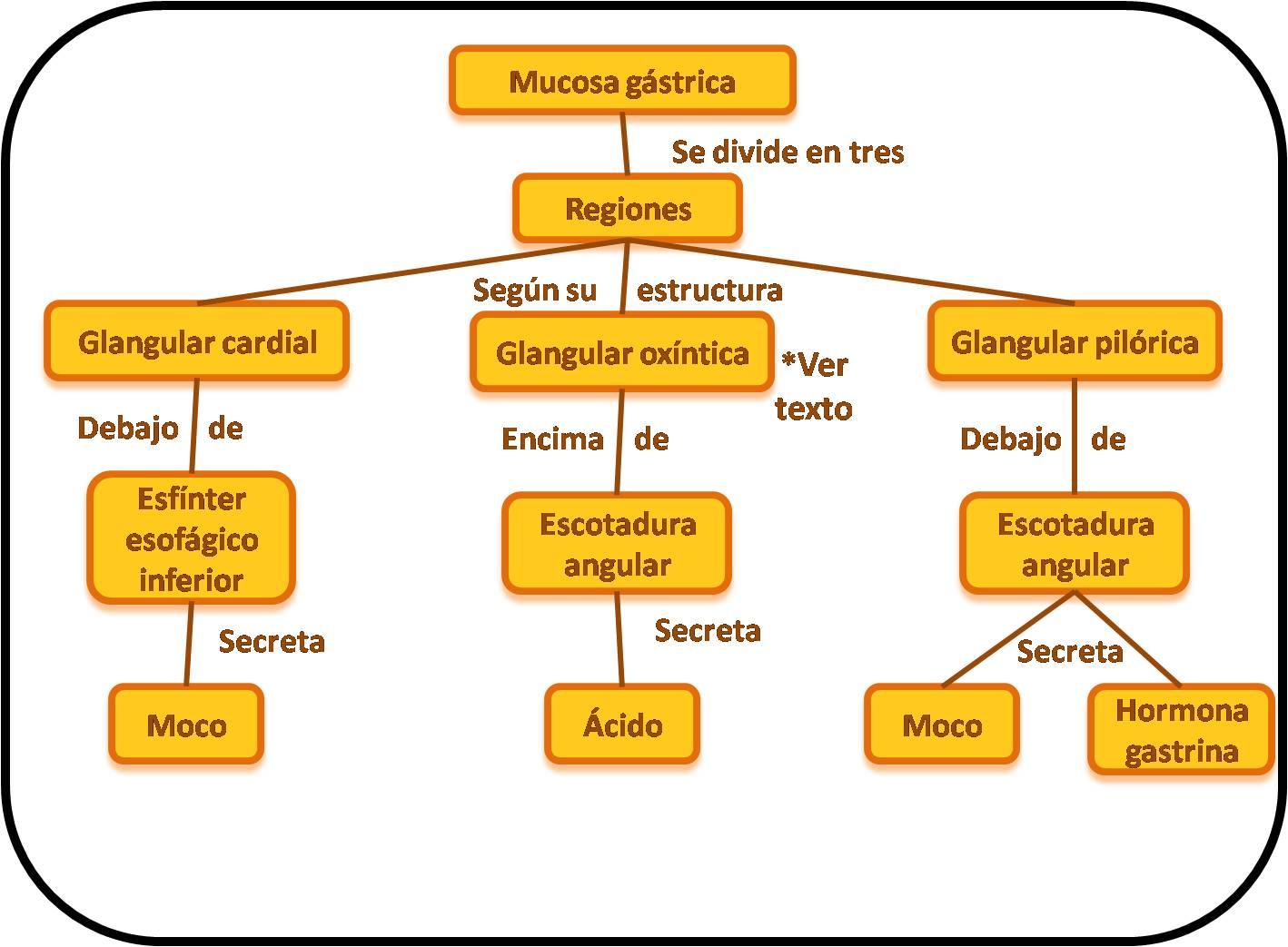 Sistema Digestivo: secreciones buco- gastrointestinales