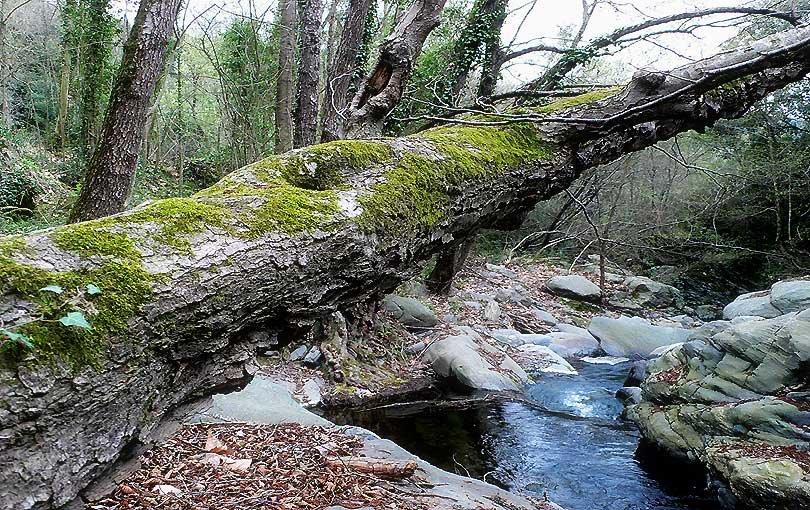 riu tordera rio river montseny arbre arbol tree aigua agua water