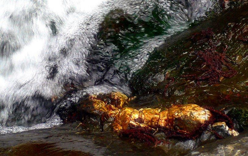 or oro gold golden riu aigua agua watter montseny escuma espuma foam