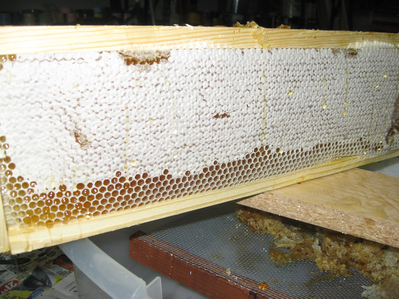 How to Know When to Harvest Honey from Your Beehive