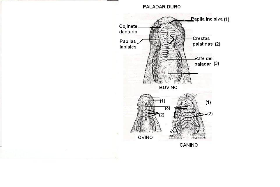 Anatomía sin dudas