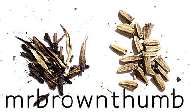 Gardening Seeds Purple Coneflower Seeds,Horseradish In Spanish