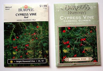 Cypress Vine, Cardinal Climber Burpee seed packs