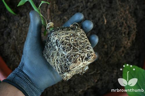 Best Garden Gloves Ever MrBrownThumb