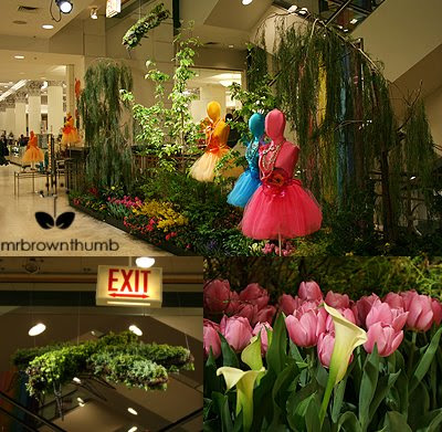Macy's on State Street Flower Show: Dream in Color