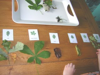 Classifying Leaves (Photo from Two Little Seeds)