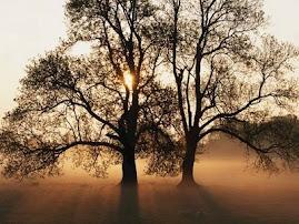 La vida sota els arbres