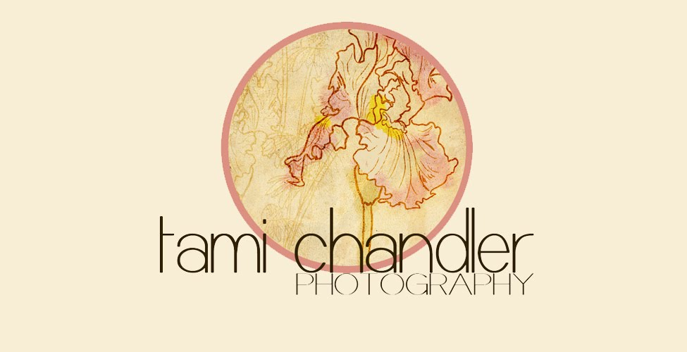 Tami Chandler Photography