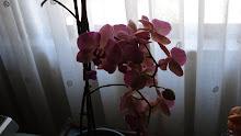 A minha orquidea