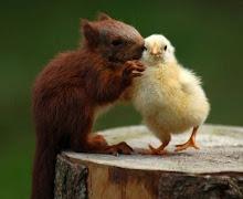 A amizade é bela!