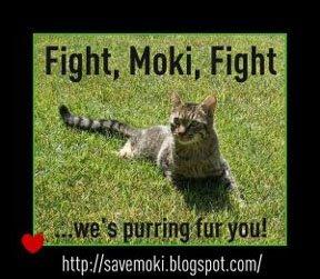 Purrray for Moki