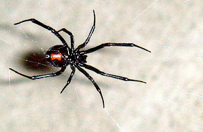 [Black_Widow_11-06.jpg]