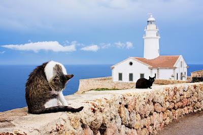 De poezen van de vuurtorenwachter van Mallorca