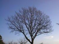 Vintersol i træernes grafik