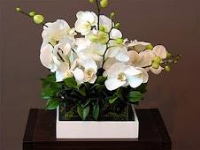 Ganhei essas flores da amiga Márcia Naressi...