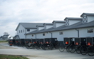 row of Amish buggies & horses