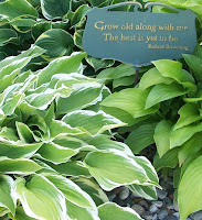 closeup of hostas