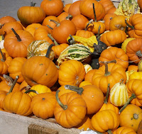 Assortment of little pumpkins