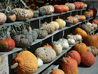 Display of bumpy pumpkins