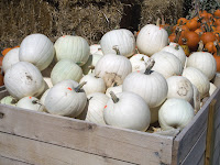 Group of white pumpkins
