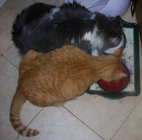 Annie and Jasper eating together from their food bowls