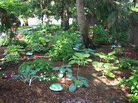 hosta plants in a shaded setting