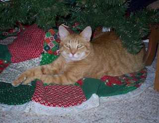 Jasper stretched out under the Christmas tree