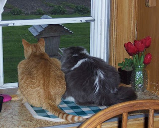 Jasper and Annie at the kitchen window studying the bird feeder