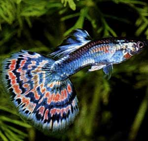 My pet news for Tropical fish species