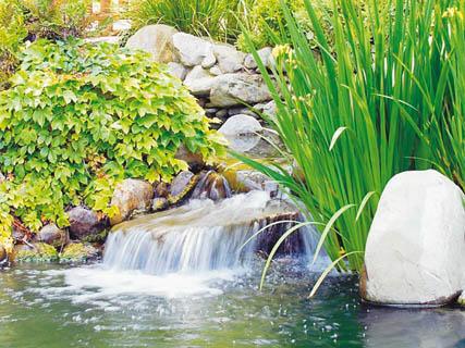 Belleza salud decoracion y estetica enero 2011 - Como decorar un estanque ...
