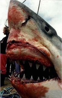 акулы бизнеса