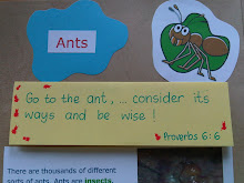 Memory Verse related to 'Insects Lesson'