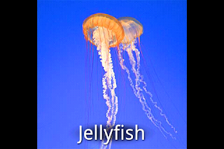 Screenshot: photo of jellyfish