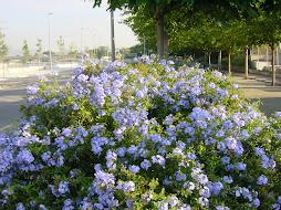 Flors al Passeig Avinguda del Vallès