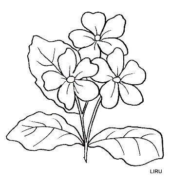 MULTY PATRON: flores para pintar