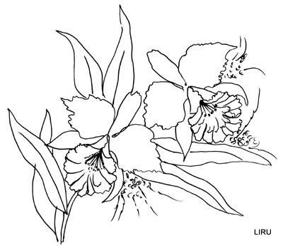 Dibujos para colorear de orquideas - Imagui