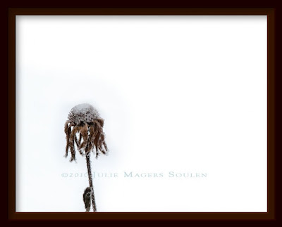 A framed photo of a single dried and frosty coneflower stands bravely against the elements of winter.