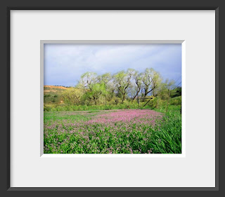 A framed photo of old and twisted cottonwoods were wearing the lacy light green of spring and standing over a field of purple wildflowers.