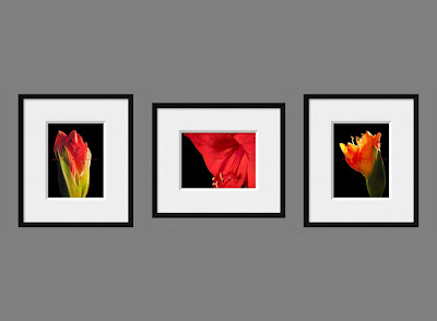 Red Flower Set of Three Display