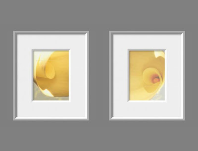 Yellow Calla Lily Photo Set of Two