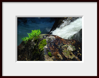 A framed photo of cascade of water misted the small plant, moss, and lichen clinging to a boulder during summer run off in the middle of the St. Vrain River in Rocky Mountain National Park in Colorado