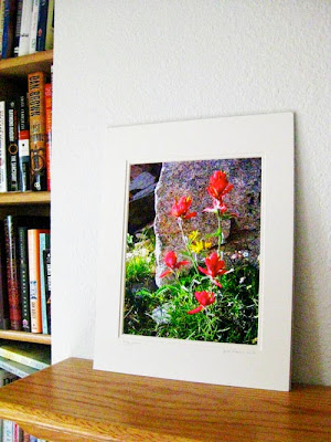 A matted photo of Indian paintbrush sitting on a fireplace mantle next to a bookshelf.