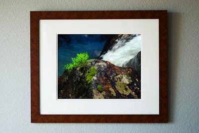 A framed photograph of a glistening boulder with a small green plant in a river cascade.