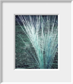 A tuft of grass bursts into a fountain of aqua color.