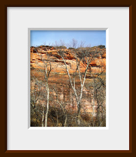 A winter stand of cottonwood trees with their white bark showing prominently provides a contrast against the sandstone cliff.