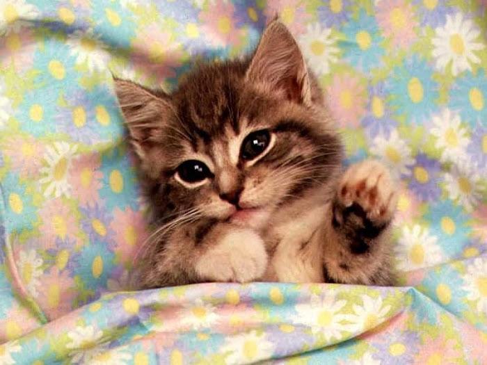 http://4.bp.blogspot.com/_B3ROZQTIkqM/R48TKqrQw0I/AAAAAAAAADk/iWbvhpkOfc0/S700/image_big_4.jpg