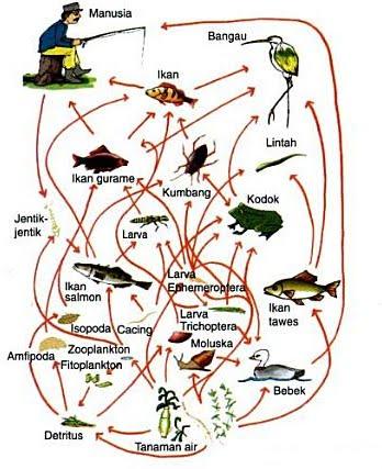 Ekosistem gambar 2 jaring jaring makanan merupakan rantai makanan yang kompleks sumber aryulina diah 2007 281 ccuart Image collections